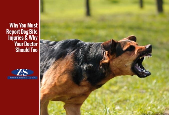 what to do after a bad dog bite