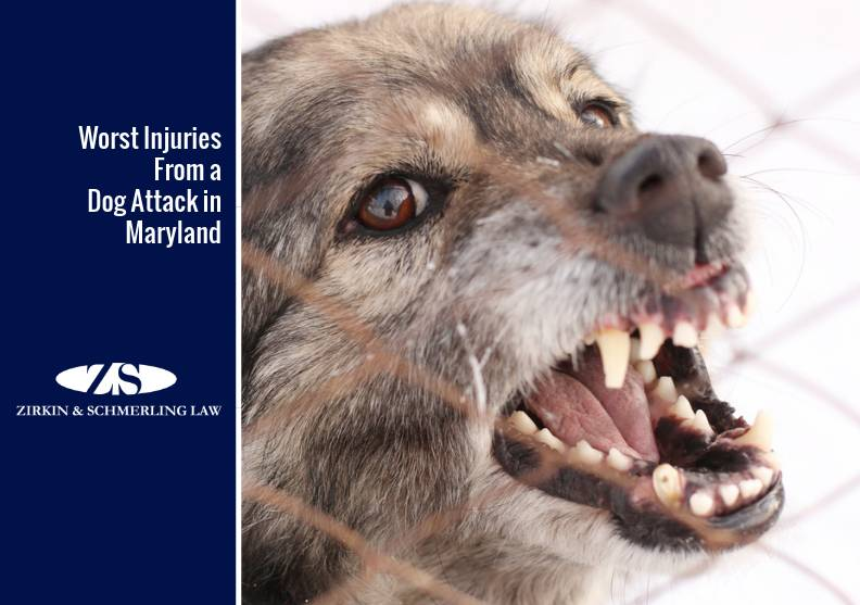 Worst Injuries From a Dog Attack in Maryland