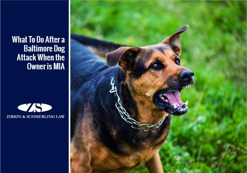 What To Do After a Baltimore Dog Attack When the Owner is MIA