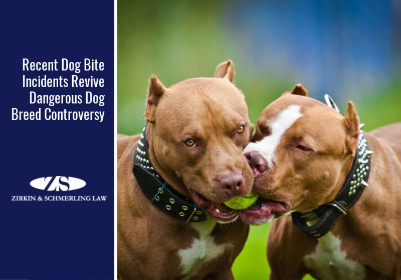 Recent Dog Bite Incidents Revive Dangerous Dog Breed Controversy