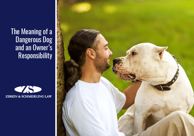 The Meaning of a Dangerous Dog and an Owner's Responsibility