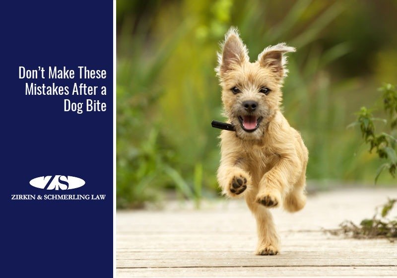 Don't Make These Mistakes After a Dog Bite