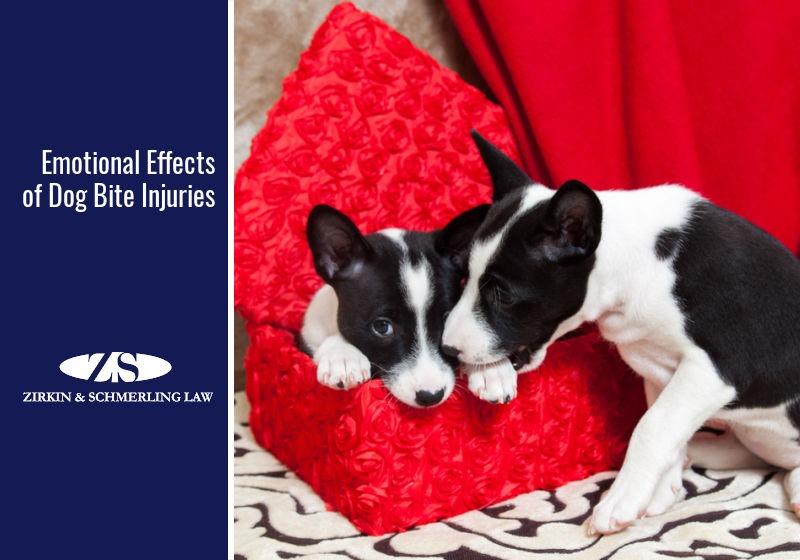emotional impact of dog bites