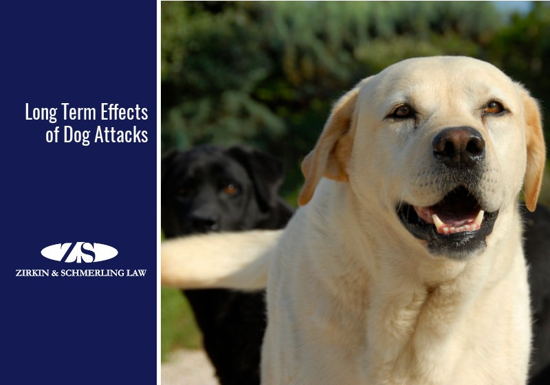 Long Term Effects of Dog Attacks