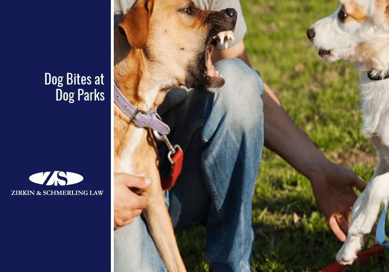 Dog Bites at Dog Parks