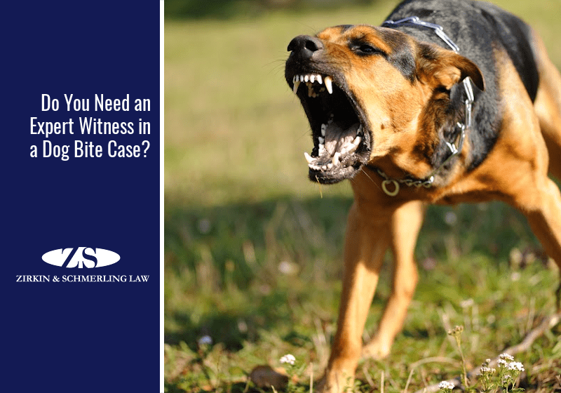 Do You Need an Expert Witness in a Dog Bite Case?